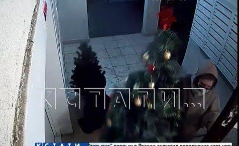Похитительницы рождества — девушки подменили дорогую елку, которой украсили подъезд — на дешевую