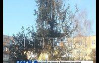 Страшно красивую елку установили в борском дворе
