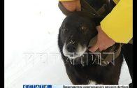 Живодерам, по заказу устроившим публичную казнь собаки, вынесен приговор