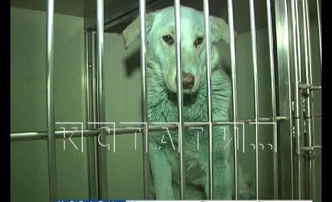 Тайна дзержинских синих собак пока не разгадана