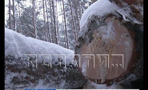 В Борском районе провернули такую схему с лесом, что никто не понимает — как такое возможно