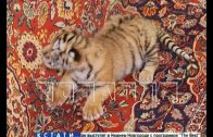 Сотрудники зоопарка выкармливают новорожденного тигренка