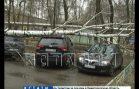 Одна береза раздавила сразу 4 автомобиля в Московском районе