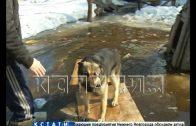 Паводок затопил дома и огороды в Ленинском районе