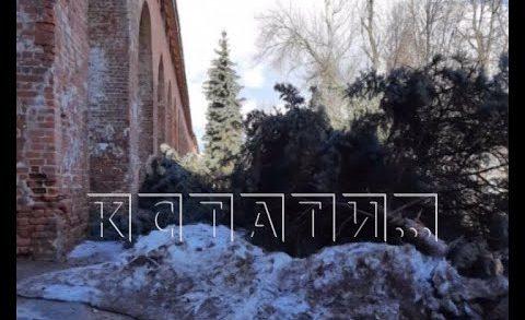 Старые деревья, в том числе и голубые ели, вырубили в Нижегородском кремле
