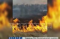 Травяной кошмар — из-за пала травы сгорело кладбище в Богородске