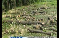 На Щелковском хуторе начали вырубать деревья. Под застройку отданы участки до самого озера.
