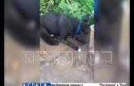 На собаку, которую спасли зоозащитники от хозяйки, желавшей ее убить, совершено новое покушение