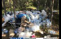 Реконструкторы, перекопавшие дороги ведущие в деревню — вместо уборки спрятали мусор глубоко в лесу