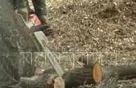 Вырубка Щелковского хутора продолжается, несмотря на возмущение местных жителей