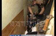 Ручная ворона и мусор от пола до потолка — семья «плюшкиных» отравляет жизнь дома в Балахне