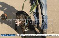Наемный убийца домашних животных предстал перед судом, а заказчик оказался лишь свидетелем