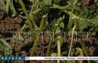 Садовое побоище в Павловском районе — ради мести бывший муж уничтожил огород супруги