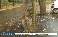 Наломали дров — дорожники закатали в асфальт деревья, не оставив им шанса на выживание