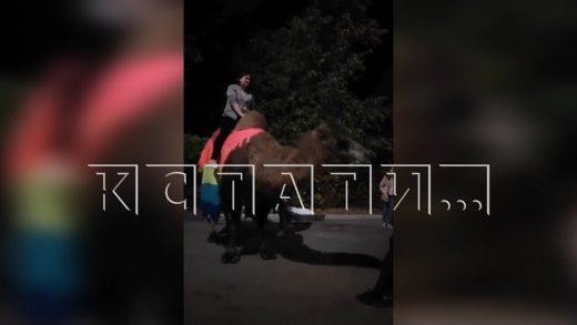 Праздничное избиение — методы, которыми хозяин заставлял верблюда работать, шокировали людей