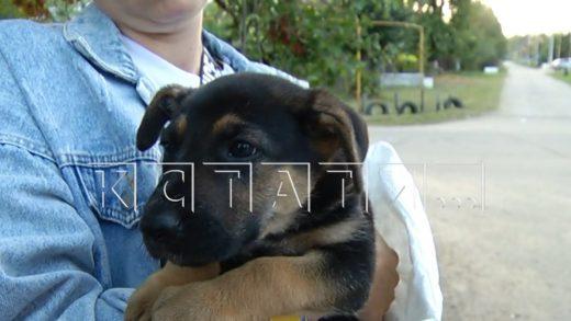 Собачья афера — продажу щенков от дворняг под видом породистых поставили на поток