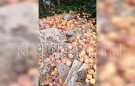 Торговцы, заваливающие леса гниющим мусором — пойманы с поличным
